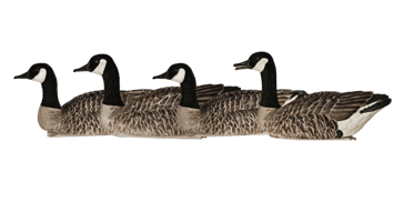 Avian-X Topflight Honkers 4 Pack Floating Canada Goose Decoys AVX9040