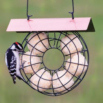 St. Albans Bay Suet Ball Feeder with Roof
