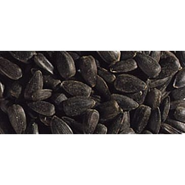 Black Oil Sunflower Seeds Bird Feed 40lb