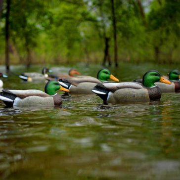 Avery Life-Size Mallards Duck Decoys 6-Pack