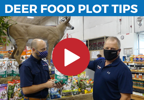 Food Plot Tips