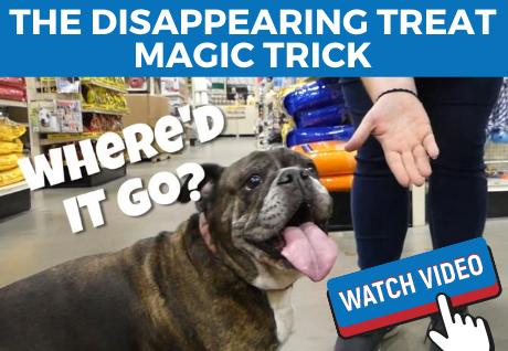 Dog Treat Video